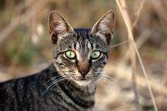 Портрет дикого striped кота в сельской местности Стоковая Фотография RF