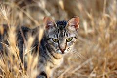 Портрет дикого striped кота в сельской местности Стоковые Фото