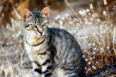 Портрет дикого striped кота в сельской местности Стоковая Фотография