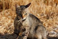 Портрет дикого striped кота в сельской местности Стоковое Изображение