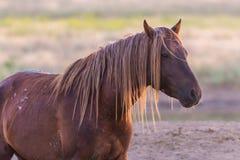 Портрет дикой лошади в живой природе Стоковые Изображения RF