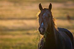Портрет дикой лошади в живой природе Стоковое Фото