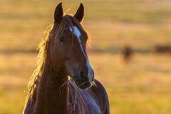 Портрет дикой лошади в живой природе Стоковое Изображение