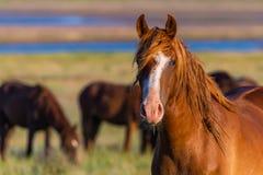 Портрет дикой лошади в живой природе Стоковые Фотографии RF