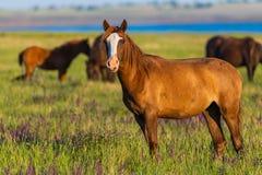 Портрет дикой лошади в живой природе Стоковое Изображение RF