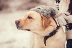 Портрет девушки и собаки Стоковая Фотография