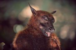 Портрет летучей мыши Стоковая Фотография