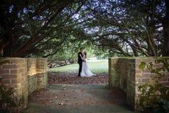 Портрет жениха и невеста под деревьями Стоковые Изображения RF