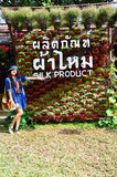Портрет женщин тайский на поле цветков космоса на сельской местности Nakornratchasrima Таиланде Стоковое Изображение RF