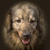 Портрет животного собаки Стоковое Фото