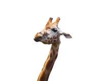Портрет жирафа Стоковое Изображение