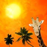 Портрет жирафа Стоковые Изображения