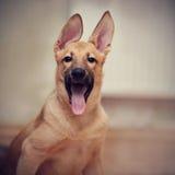 Портрет забавного щенка Стоковая Фотография RF