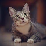 Портрет заботливого striped кота Стоковая Фотография