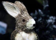 Портрет зайца Стоковые Фото
