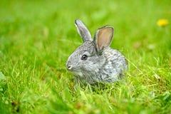 Портрет зайцев Стоковое Изображение