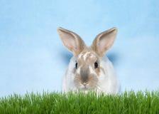 Портрет зайчика в траве Стоковая Фотография