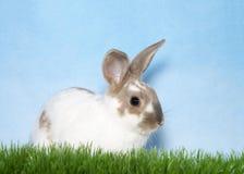 Портрет зайчика в траве Стоковое Фото