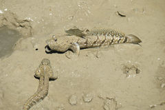 Портрет запятнанного синью шкипера грязи стоковое фото rf