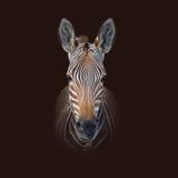 Портрет зебры горы накидки Стоковая Фотография RF