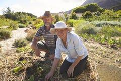 Портрет зрелых пар работая на уделении общины Стоковые Изображения RF