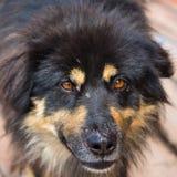Портрет злой бездомной собаки Стоковые Изображения RF