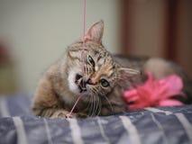 Портрет играя кота Стоковые Изображения RF