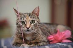 Портрет играя кота Стоковое Изображение