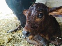Портрет икры новорожденного Стоковая Фотография RF