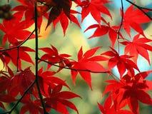 Портрет листьев осени II Стоковые Фотографии RF