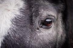 Портрет конца-вверх глаза коричневого цвета ` s лошади стоковые фотографии rf