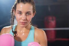 Портрет конца-вверх молодого женского боксера Стоковая Фотография RF