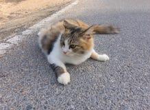 Портрет коричневого, черного и серого кота на дороге Стоковое Изображение RF