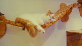 Портрет коричневых предпосылок кота Стоковые Изображения RF