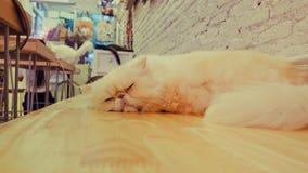 Портрет коричневых предпосылок кота Стоковая Фотография