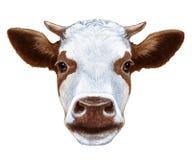 Портрет коровы иллюстрация вектора