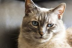 Портрет кота - близкое поднимающее вверх стоковая фотография