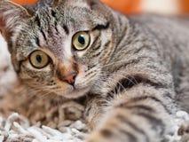 Портрет кота внутри дома Стоковое фото RF