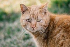 Портрет кота в саде в саде Стоковые Фотографии RF