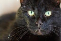 Портрет кота/кота Стоковые Изображения