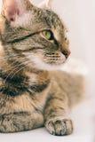 Портрет кота на окне стоковая фотография rf