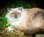 Портрет кота принятый в ночу Стоковое Фото