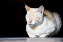 Портрет кота спать Стоковые Фото