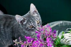 Портрет кота с цветками Стоковая Фотография
