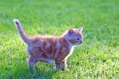портрет кота Стоковые Фото