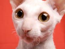 портрет кота Стоковое фото RF