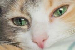 Портрет кота Стоковые Фотографии RF