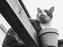 Портрет кота Стоковая Фотография RF