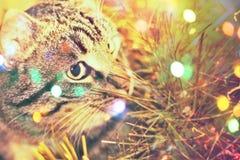 Портрет кота Tabby Стоковое Изображение