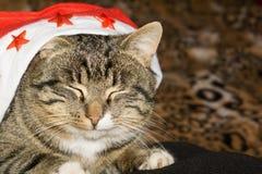 Портрет кота Tabby Стоковое Изображение RF